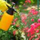 Spraying organic pest control
