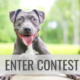Enter the Post a Picture of Your Pet Contest